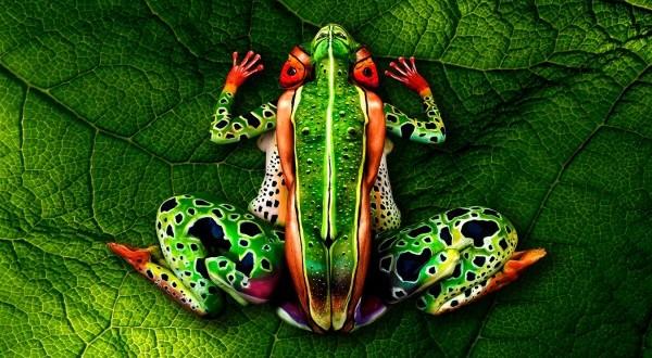 frog-johannes-stoetter_2-600x400