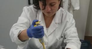 Tumore al polmone: scoperto un nuovo meccanismo d'azione della doxorubicina.