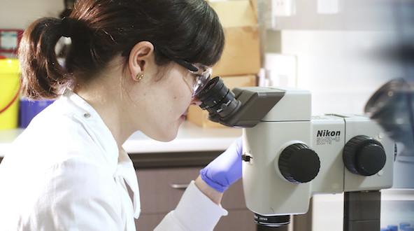 immagine sulla ricerca scientifica tratta da www.unipa.it