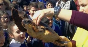 tartarughe1