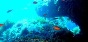 area-marina-protetta-capo-gallo-isola