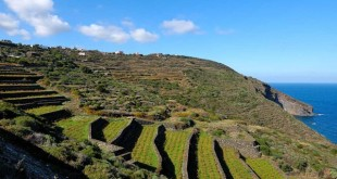 pantelleria-vite-paesaggio-a-terrazze-640x426