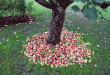 mela-albero