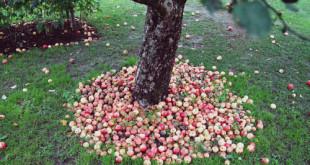Una ricerca sul consumo di prodotti bio