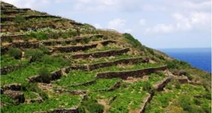Muretti a secco, patrimonio dell'Unesco.
